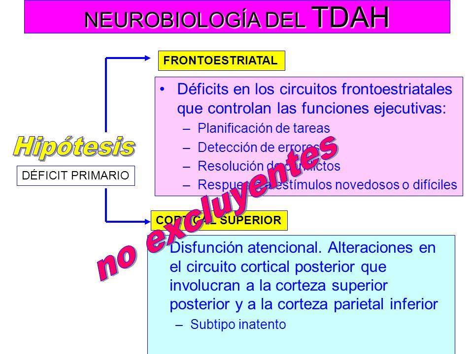 NEUROBIOLOGÍA DEL TDAH