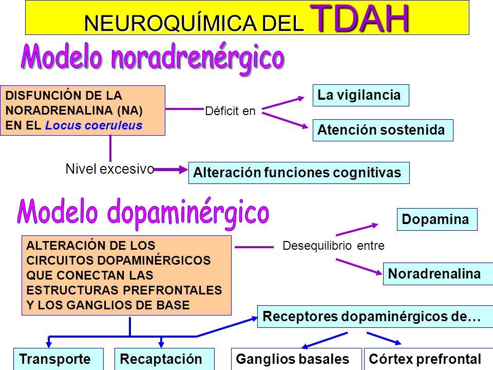 Modelo noradrenérgico