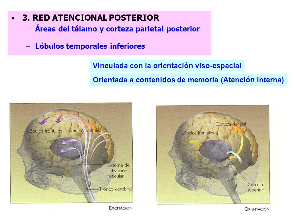 3. RED ATENCIONAL POSTERIOR