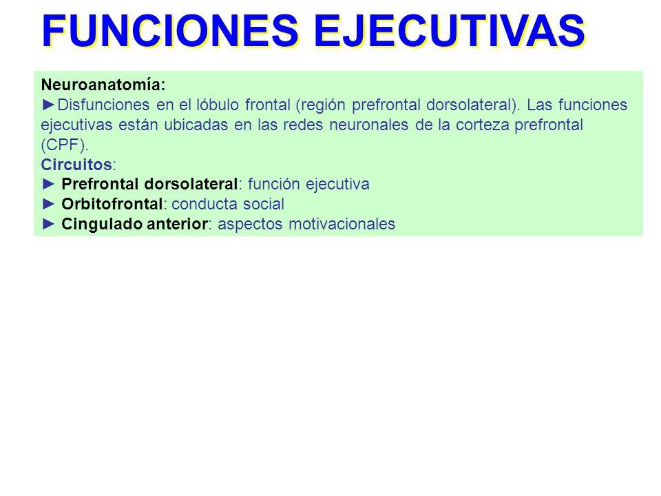 FUNCIONES EJECUTIVAS Neuroanatomía:
