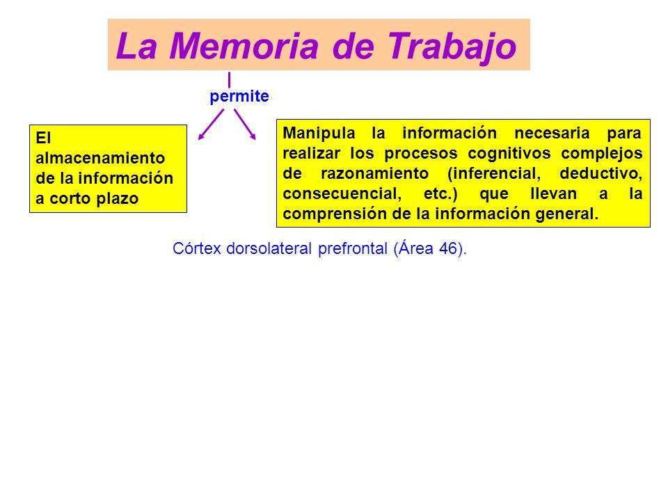 La Memoria de Trabajo permite