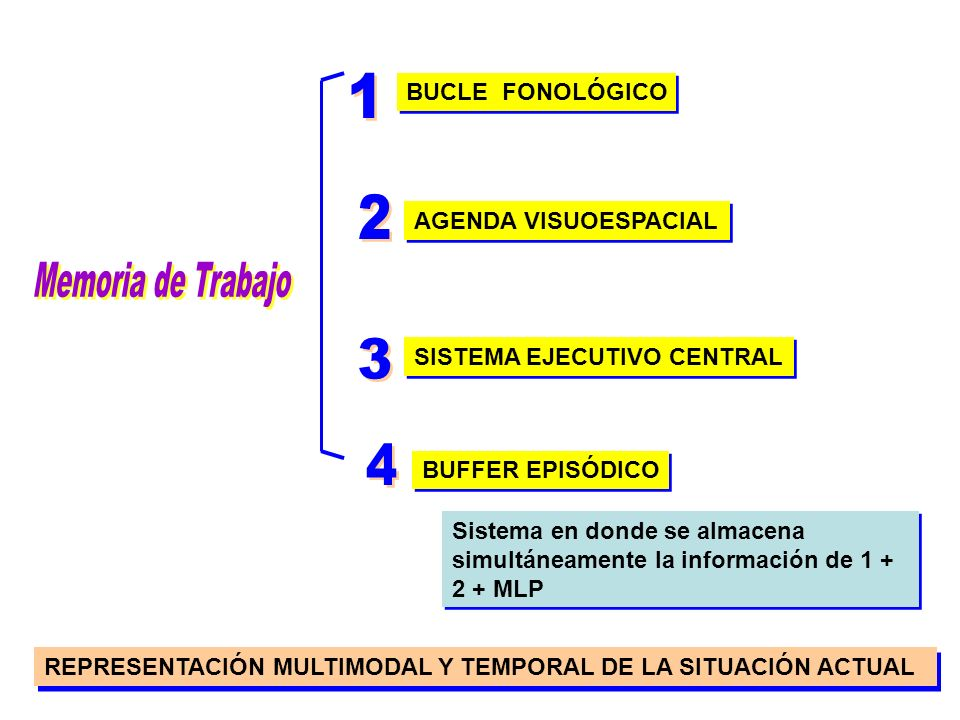 1 2 Memoria de Trabajo 3 4 BUCLE FONOLÓGICO AGENDA VISUOESPACIAL