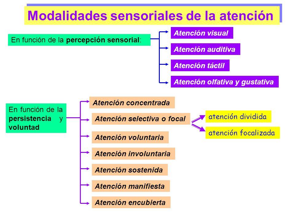 Modalidades sensoriales de la atención