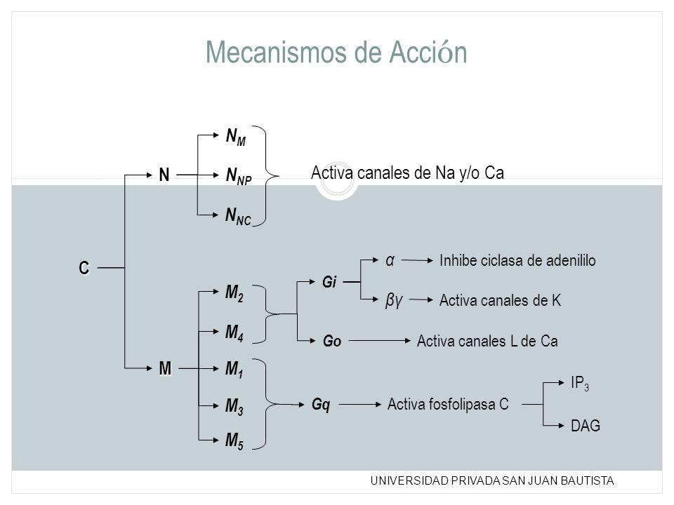 Mecanismos de Acción NM N NNP Activa canales de Na y/o Ca NNC α C M2