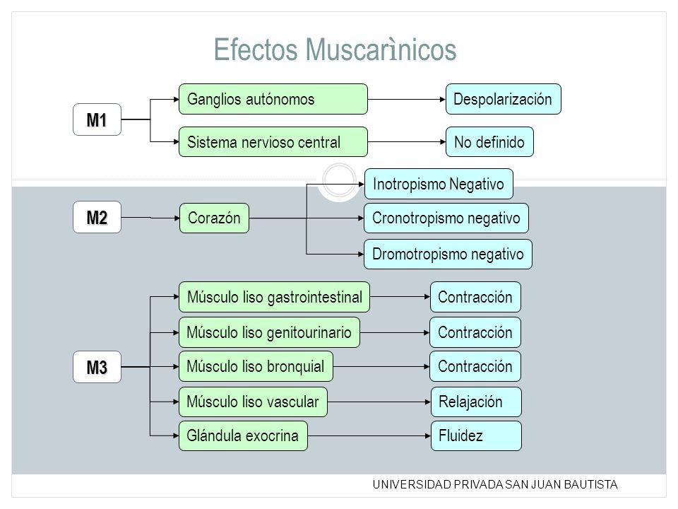 Efectos Muscarìnicos M1 M2 M3 Ganglios autónomos Despolarización