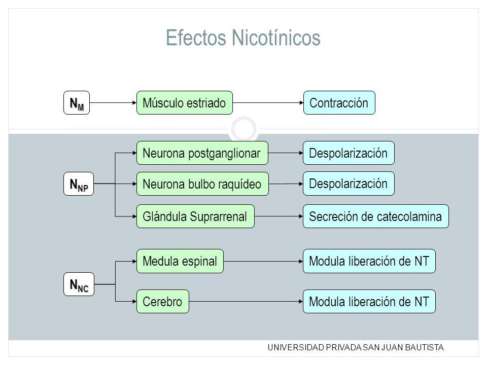Efectos Nicotínicos NM Músculo estriado Contracción