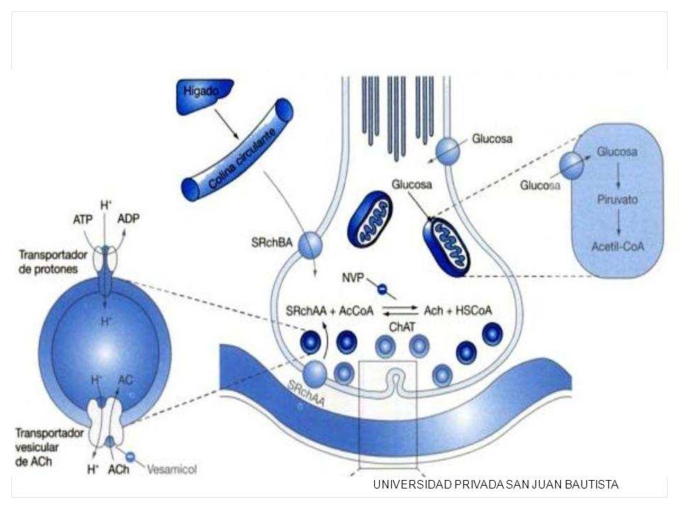 NVP 4,(1 nagtivinil) piridina