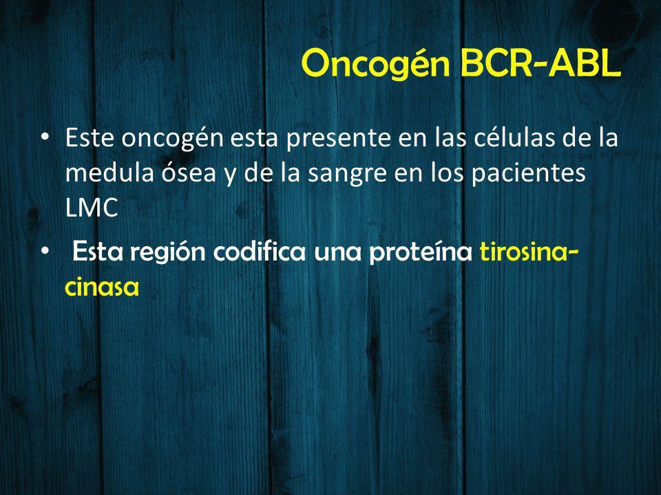 Oncogén BCR-ABL Este oncogén esta presente en las células de la medula ósea y de la sangre en los pacientes LMC.