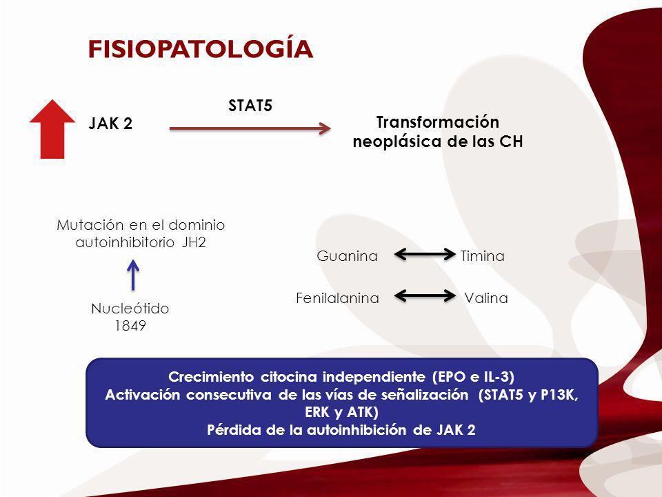 FISIOPATOLOGÍA JAK 2 STAT5 Transformación neoplásica de las CH