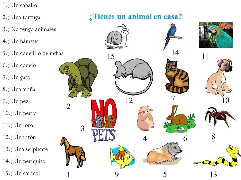 ¿Tienes un animal en casa