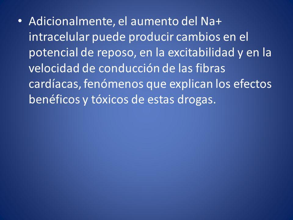 Adicionalmente, el aumento del Na+ intracelular puede producir cambios en el potencial de reposo, en la excitabilidad y en la velocidad de conducción de las fibras cardíacas, fenómenos que explican los efectos benéficos y tóxicos de estas drogas.