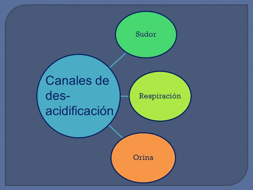 Sudor Respiración Orina Canales de des- acidificación