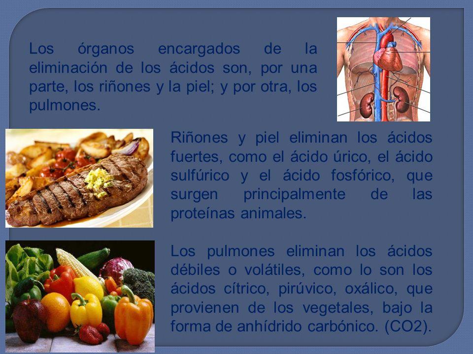 Los órganos encargados de la eliminación de los ácidos son, por una parte, los riñones y la piel; y por otra, los pulmones.