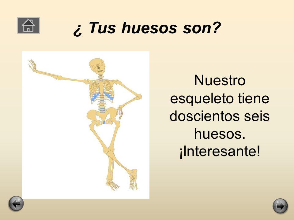 Nuestro esqueleto tiene doscientos seis huesos. ¡Interesante!