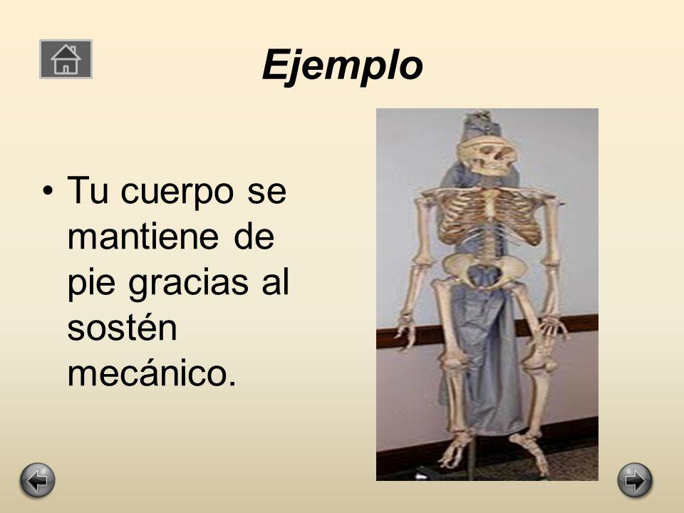 Ejemplo Tu cuerpo se mantiene de pie gracias al sostén mecánico.