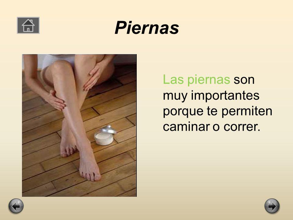 Piernas Las piernas son muy importantes porque te permiten caminar o correr.