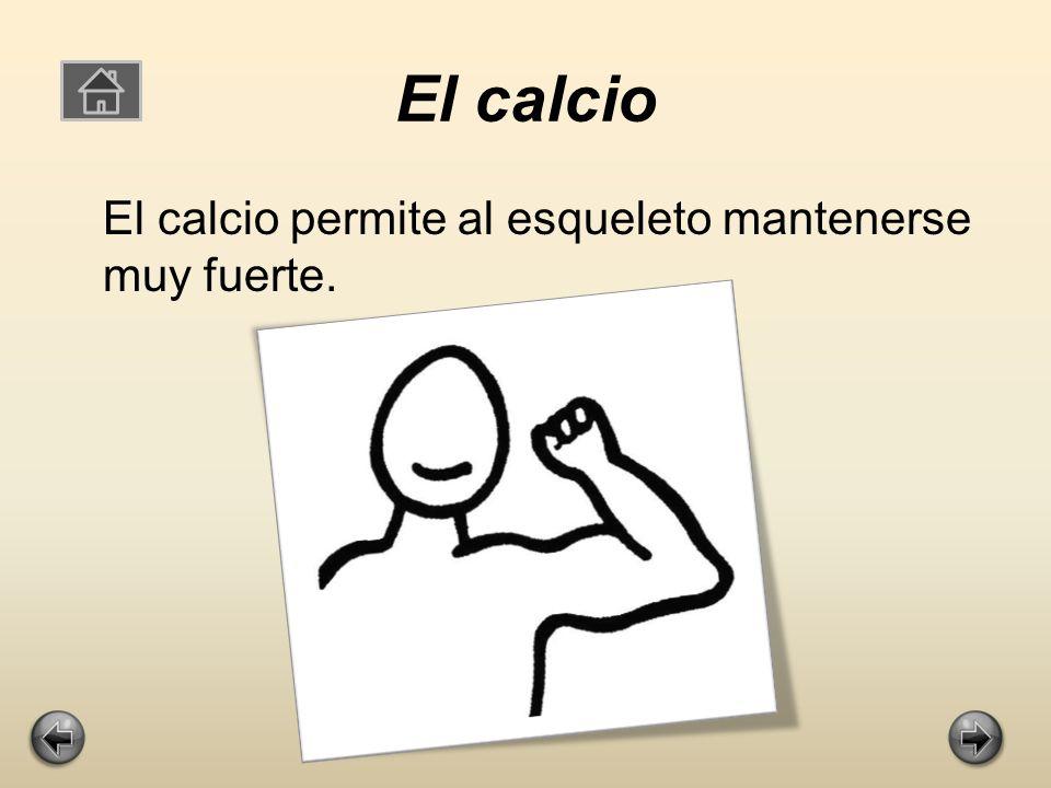 El calcio El calcio permite al esqueleto mantenerse muy fuerte.