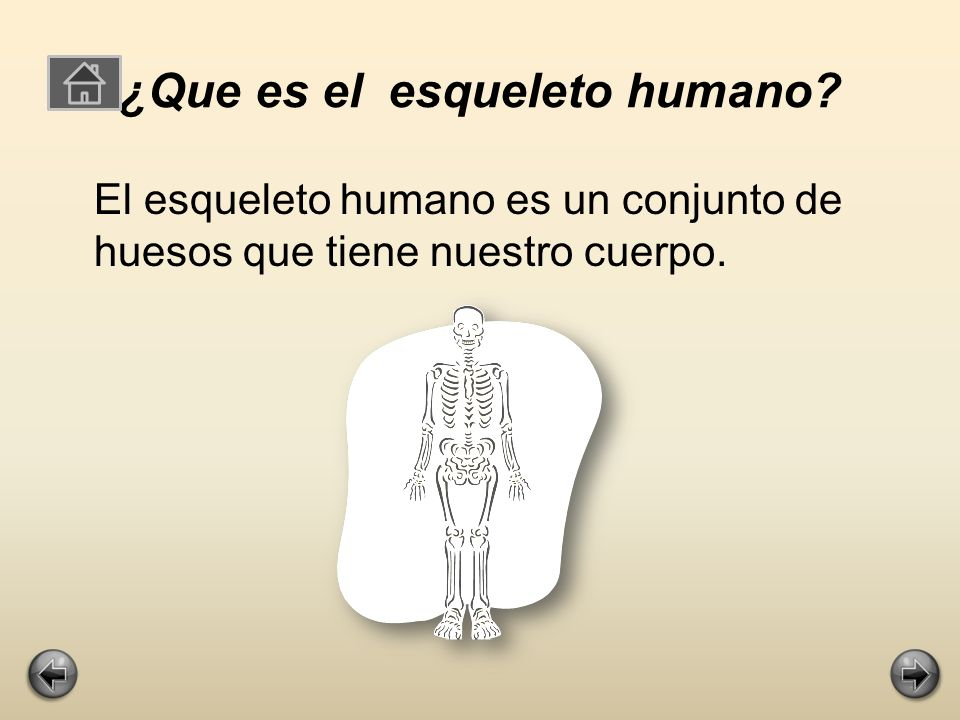 ¿Que es el esqueleto humano