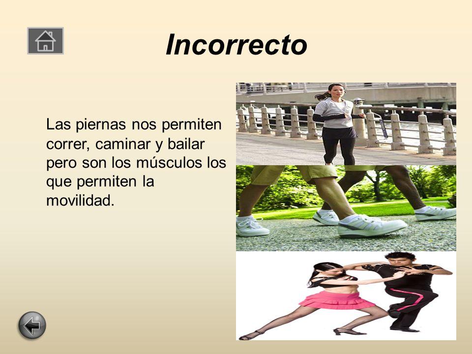 Incorrecto Las piernas nos permiten correr, caminar y bailar pero son los músculos los que permiten la movilidad.
