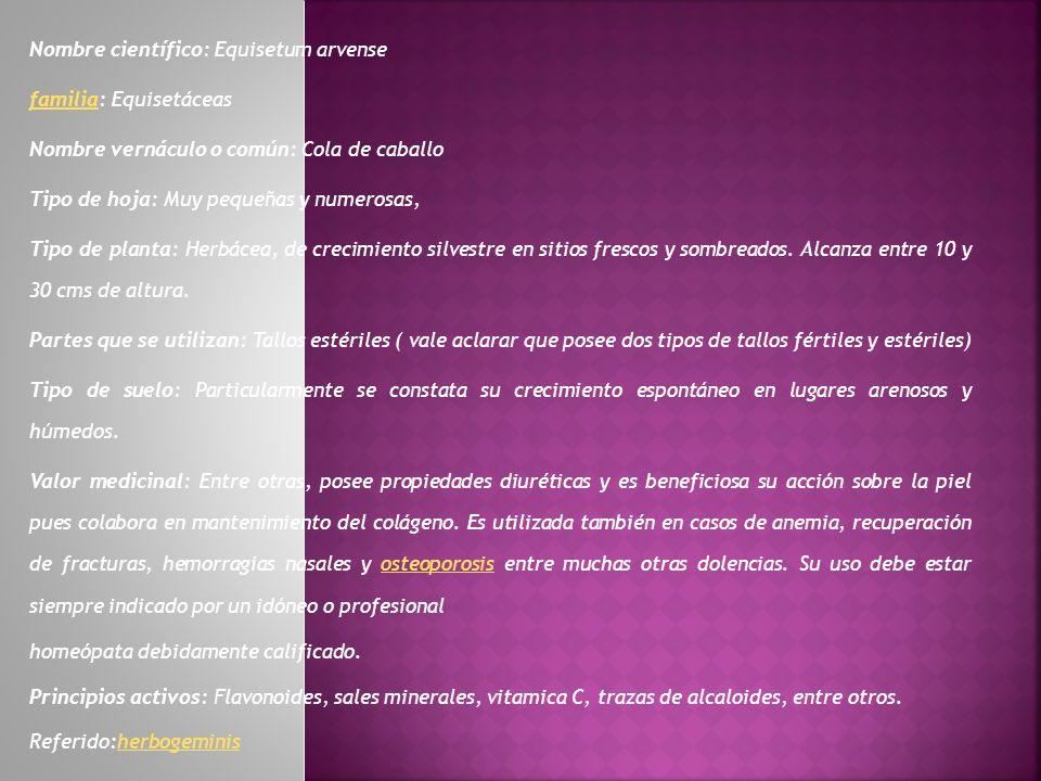 Nombre científico: Equisetum arvense