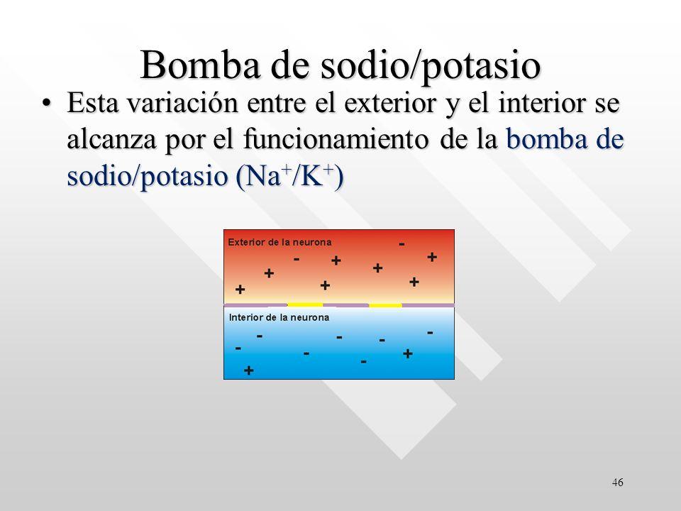 Bomba de sodio/potasio