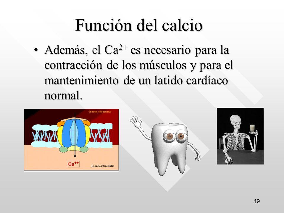 Función del calcio Además, el Ca2+ es necesario para la contracción de los músculos y para el mantenimiento de un latido cardíaco normal.