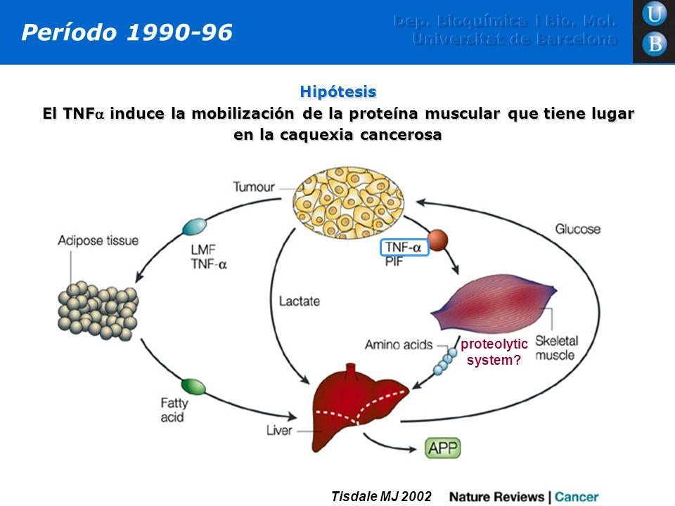 Período 1990-96 Dep. Bioquímica i Bio. Mol. Universitat de Barcelona