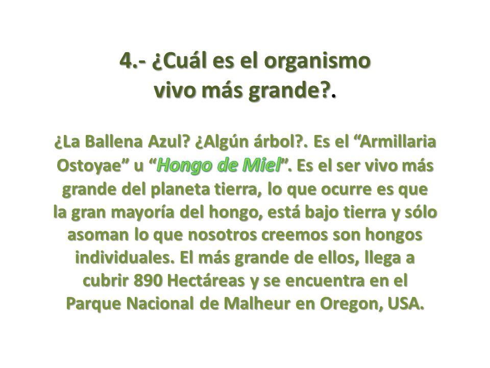 4.- ¿Cuál es el organismo vivo más grande .