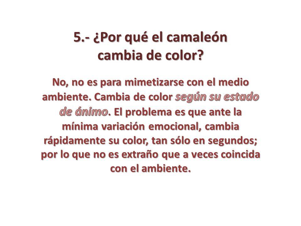 5.- ¿Por qué el camaleón cambia de color