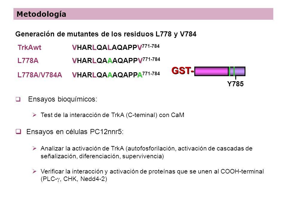 GST- Metodología Generación de mutantes de los residuos L778 y V784