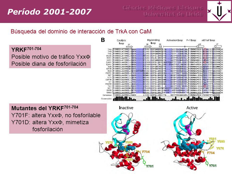 Período 2001-2007 Búsqueda del dominio de interacción de TrkA con CaM