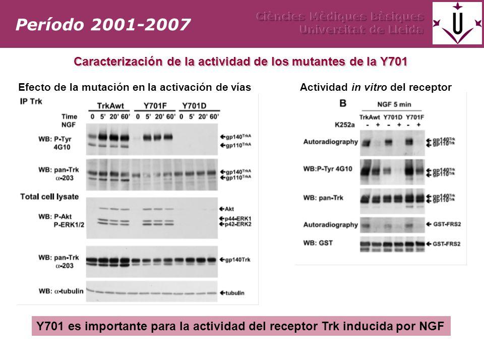 Período 2001-2007 Ciències Mèdiques Bàsiques. Universitat de Lleida. Caracterización de la actividad de los mutantes de la Y701.