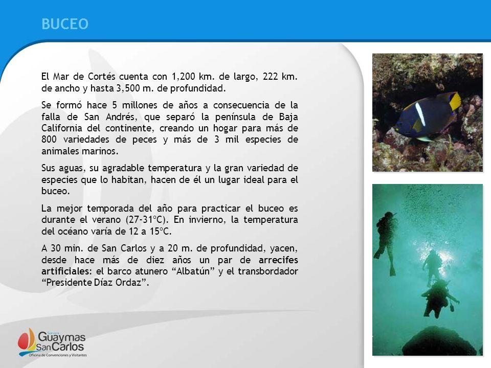 BUCEO BUCEO. El Mar de Cortés cuenta con 1,200 km. de largo, 222 km. de ancho y hasta 3,500 m. de profundidad.