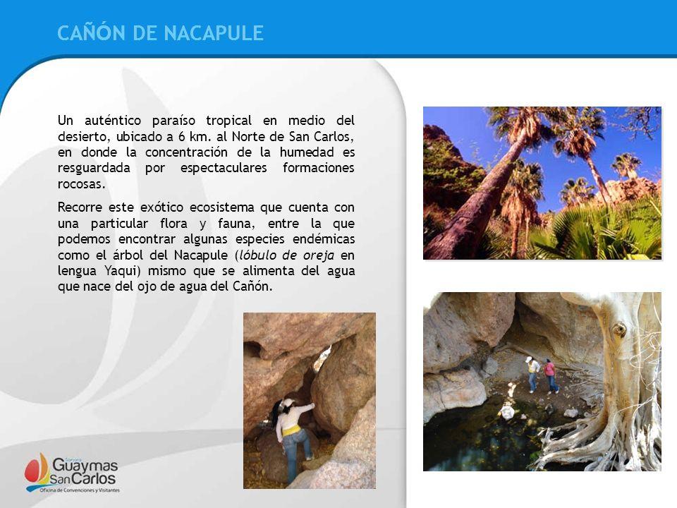 CAÑÓN DE NACAPULE CAÑÓN DE NACAPULE