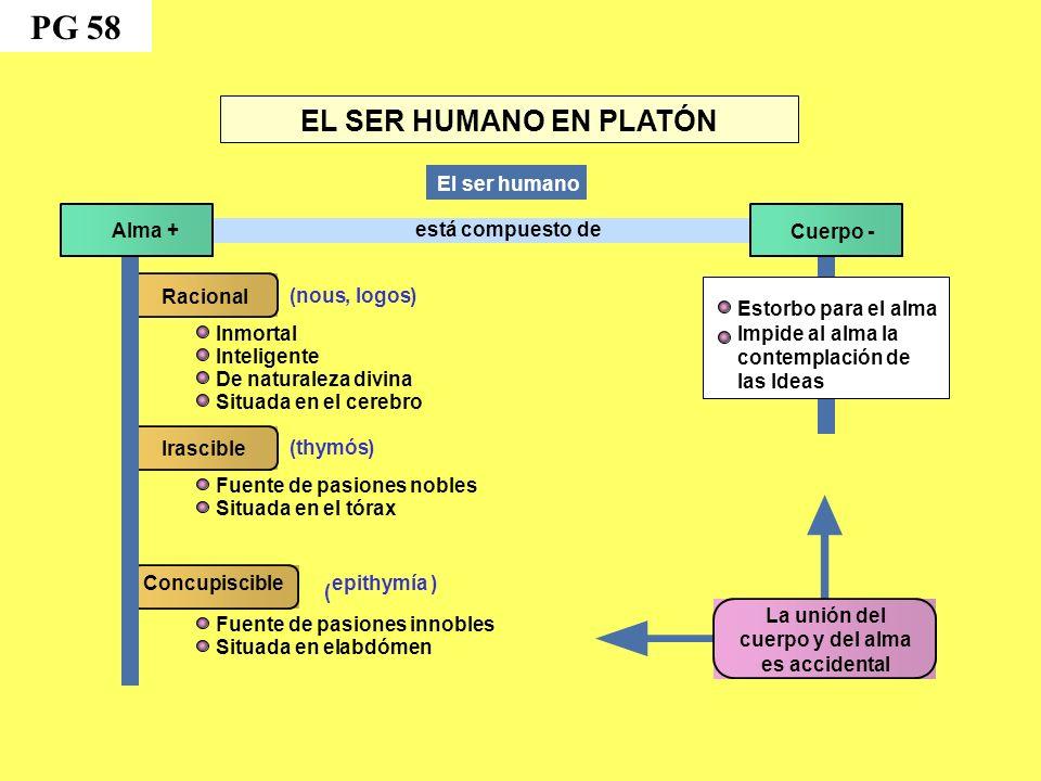 PG 58 EL SER HUMANO EN PLATÓN El ser humano Alma + está compuesto de