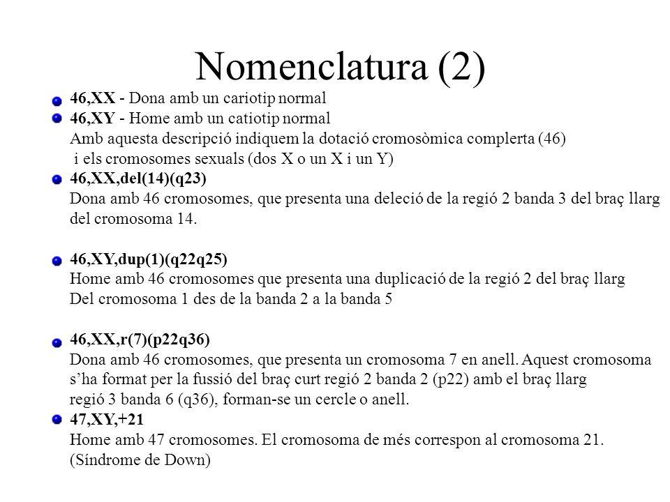 Nomenclatura (2) 46,XX - Dona amb un cariotip normal