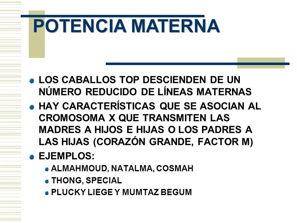 POTENCIA MATERNA LOS CABALLOS TOP DESCIENDEN DE UN NÚMERO REDUCIDO DE LÍNEAS MATERNAS.