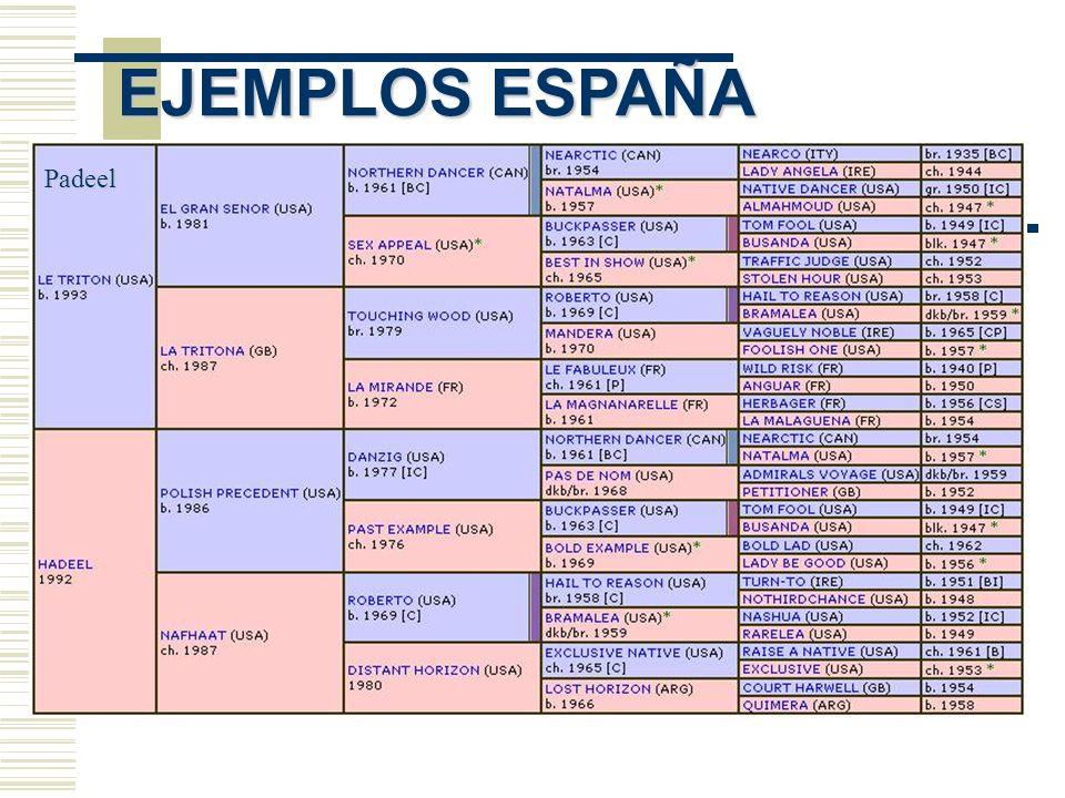 EJEMPLOS ESPAÑA Padeel