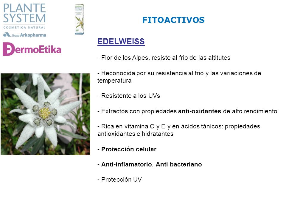 FITOACTIVOS EDELWEISS