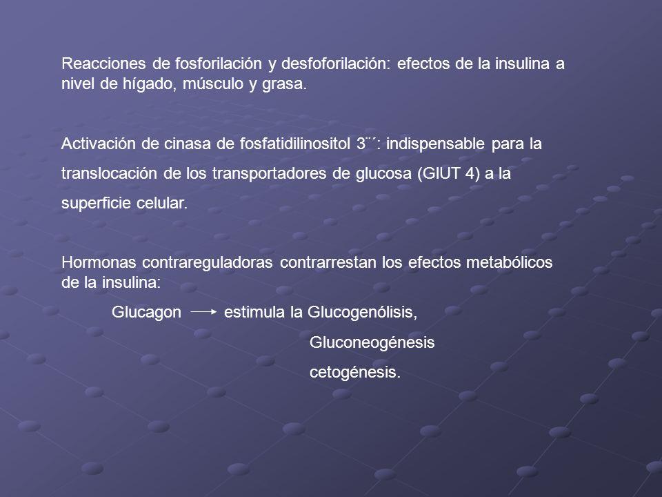 Reacciones de fosforilación y desfoforilación: efectos de la insulina a nivel de hígado, músculo y grasa.