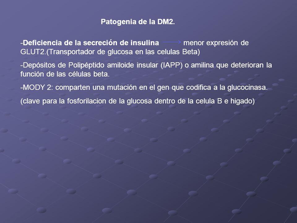 Patogenia de la DM2. Deficiencia de la secreción de insulina menor expresión de GLUT2.(Transportador de glucosa en las celulas Beta)