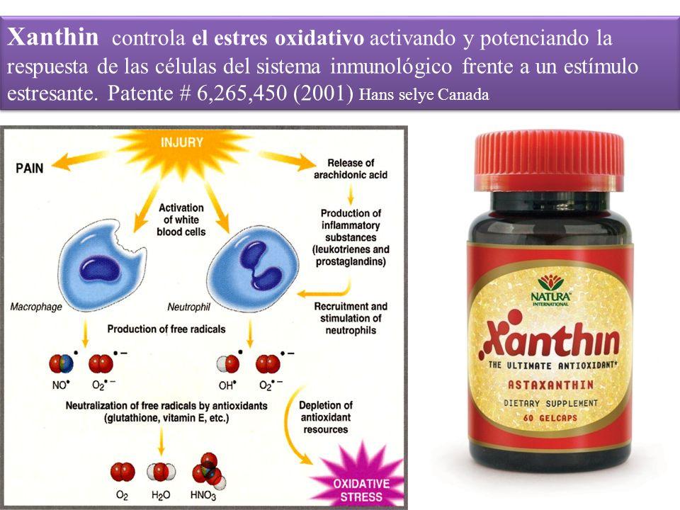 Xanthin controla el estres oxidativo activando y potenciando la respuesta de las células del sistema inmunológico frente a un estímulo estresante.