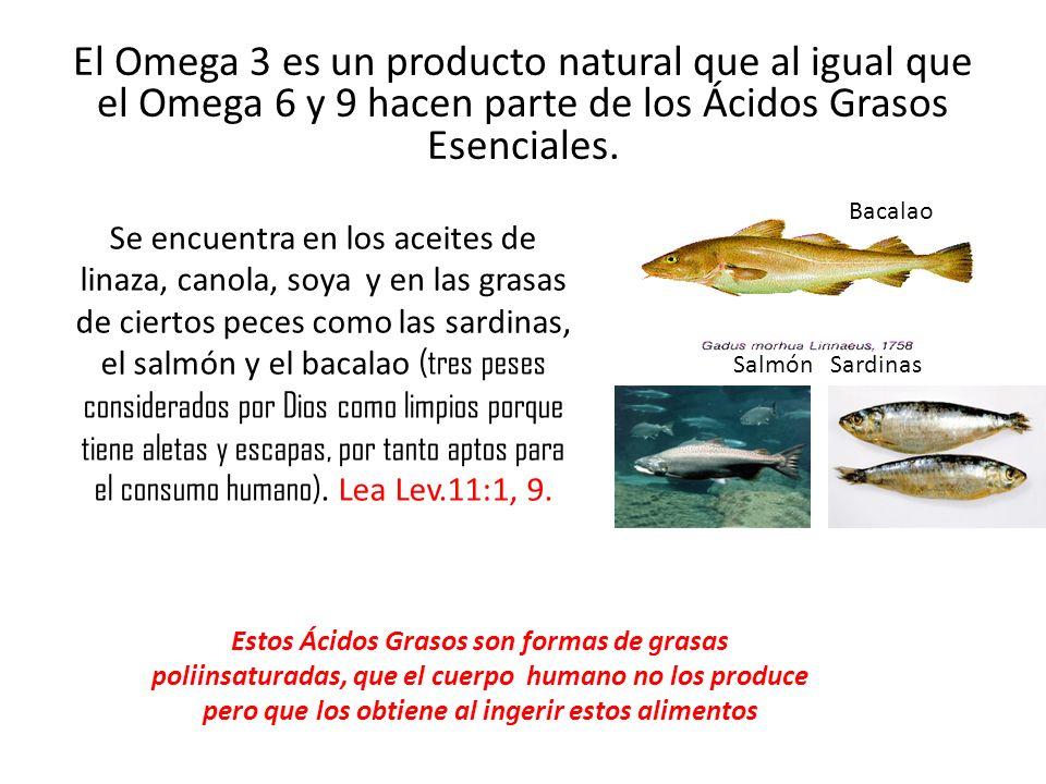 El Omega 3 es un producto natural que al igual que el Omega 6 y 9 hacen parte de los Ácidos Grasos Esenciales.
