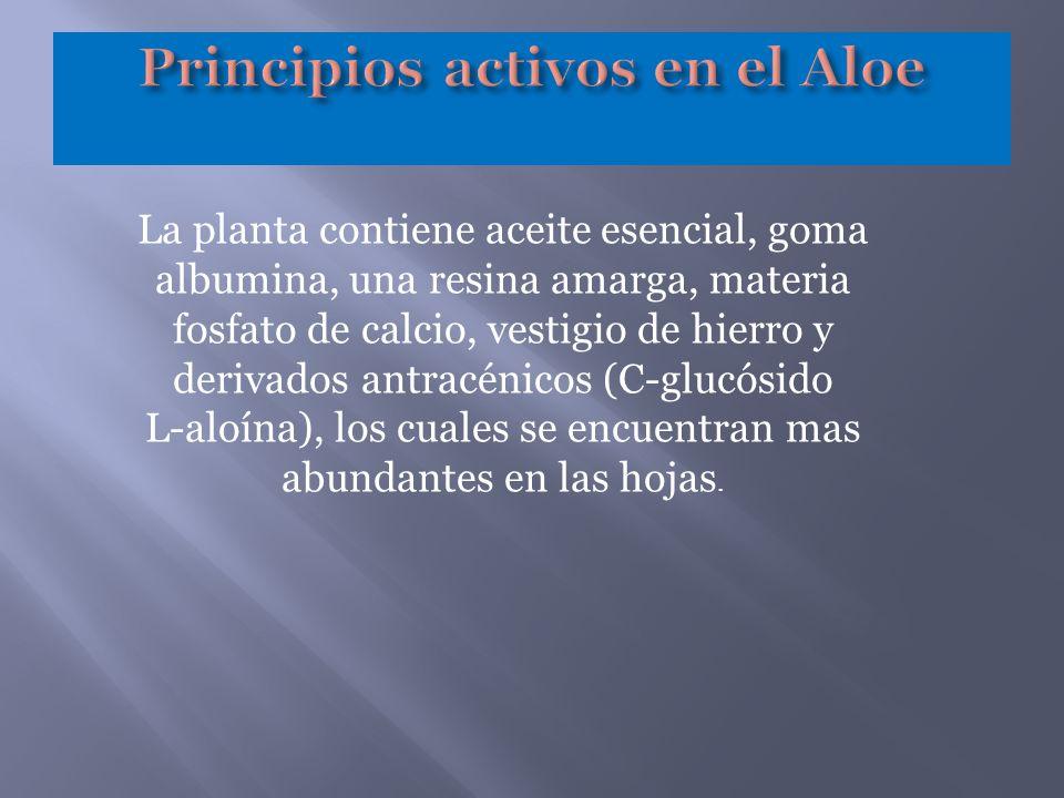 Principios activos en el Aloe