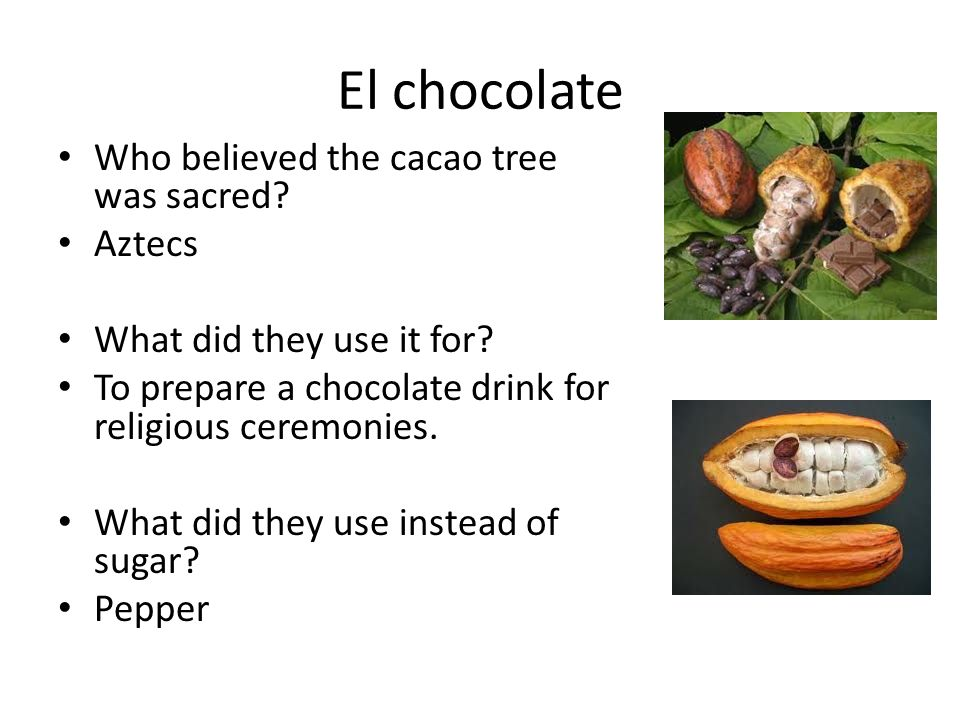 El chocolate Who believed the cacao tree was sacred Aztecs