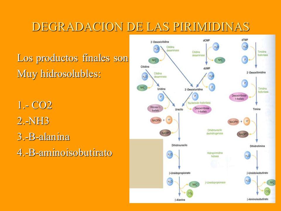 DEGRADACION DE LAS PIRIMIDINAS