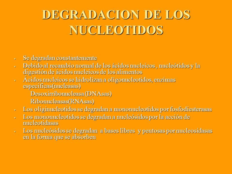DEGRADACION DE LOS NUCLEOTIDOS