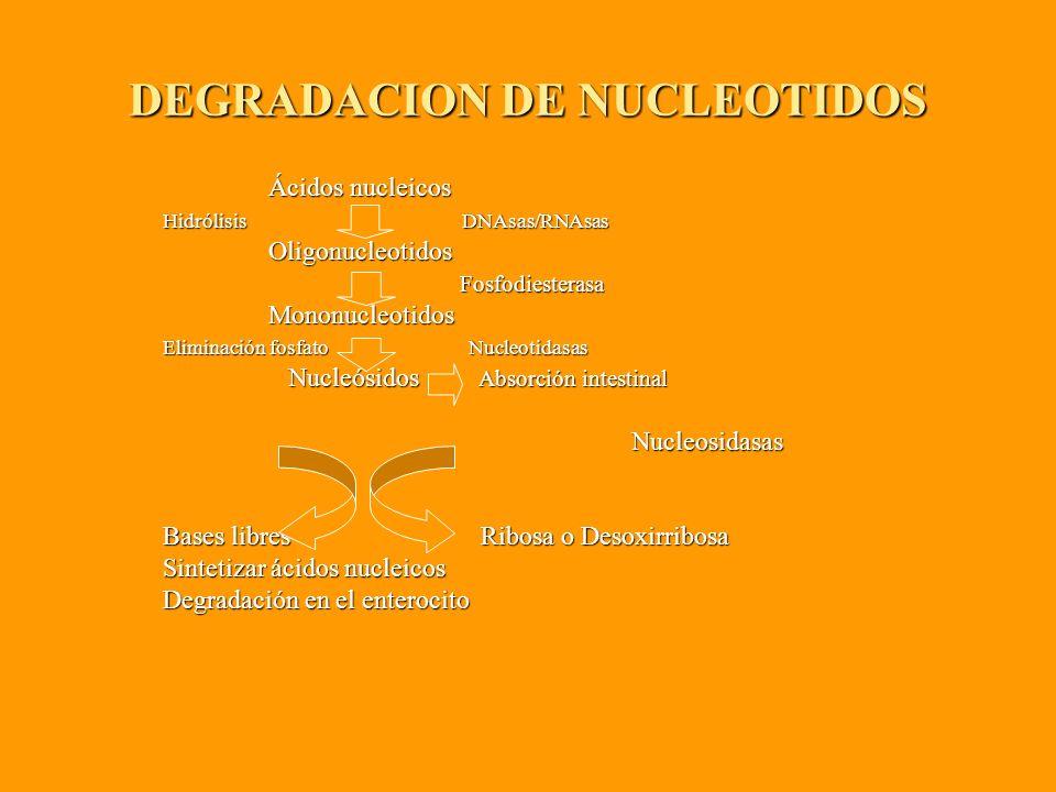 DEGRADACION DE NUCLEOTIDOS