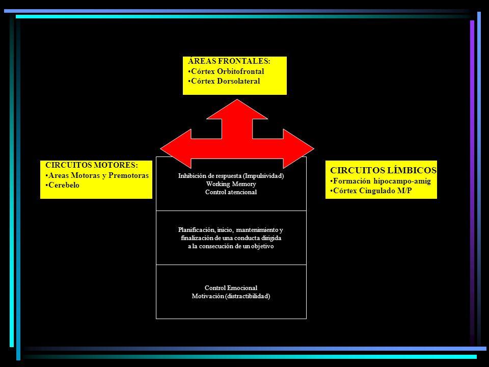 CIRCUITOS LÍMBICOS: ÁREAS FRONTALES: Córtex Orbitofrontal