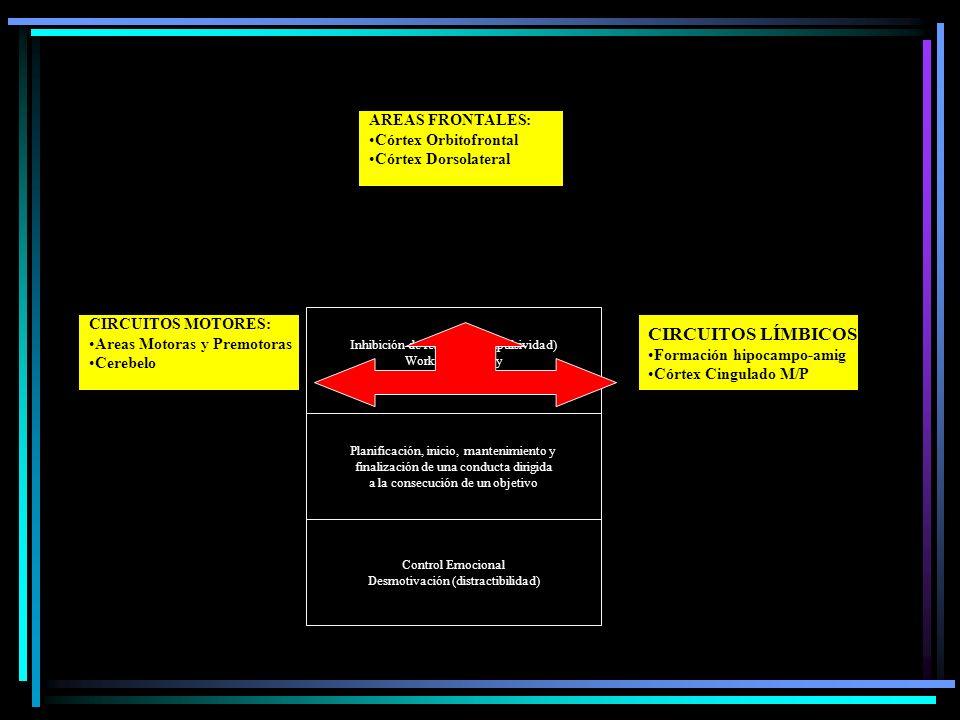 CIRCUITOS LÍMBICOS: AREAS FRONTALES: Córtex Orbitofrontal